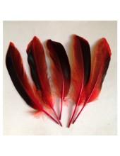 20 шт. Красный цвет. Перья цветной утки 10-15 см.