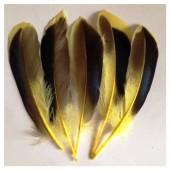 20 шт. Желтый цвет. Перья цветной утки 10-15 см.