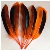 20 шт. Оранжевый цвет. Перья цветной утки 10-15 см.