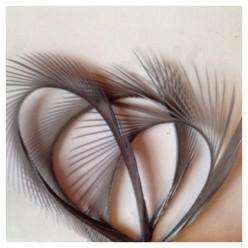 20 шт. Серый цвет. Гусиное перо 13-18 см. Волосок