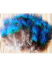 20 шт. Голубой цвет. Перья павлина 3-7 см.